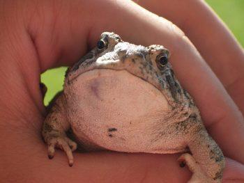 littlefrog1